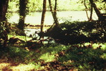 Coytee Spring before Being Bulldozed