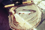 Fish in Net, Little Tennessee River
