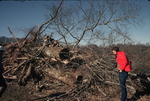 Man Observes Felled Trees, Little Tennessee River