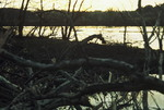 Banks of the Little Tennessee River after Bulldozing